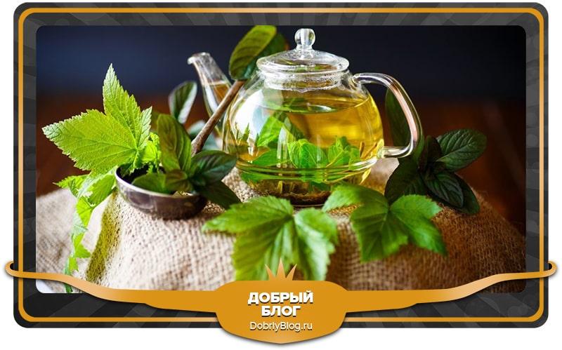 Разжижает кровь Чай из листьев чёрной смородины