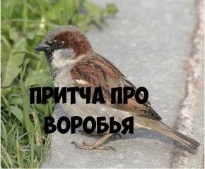 Притча про птичку