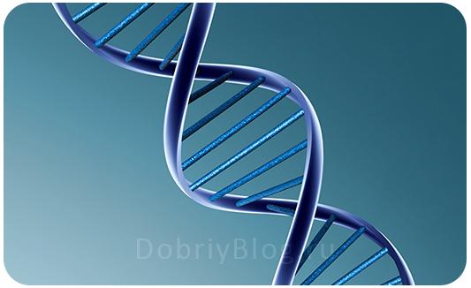 Проведение генетической экспертизы отцовства.